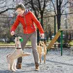Berufshaftpflichtversicherung Hundetrainer