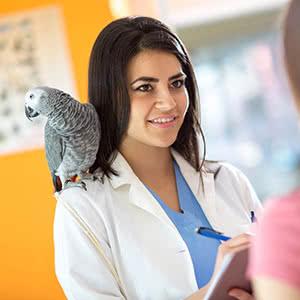 Berufshaftpflichtversicherung Tierphysiotherapeut - Beratungsgespräch