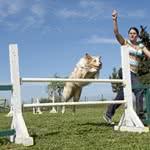 Betriebshaftpflichtversicherung Hundetrainer