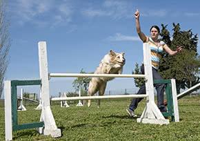 Betriebshaftpflichtversicherung Hundetrainer – Hundetrainerin mit einem Collie