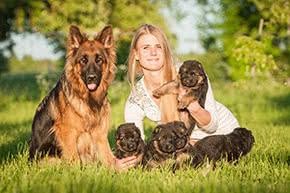 Betriebshaftpflichtversicherung Hundezüchter – Hundezüchterin mit Schäferhundwelpen