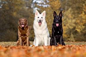 Hundehalterhaftpflicht - 3 verschiedene Hundearten