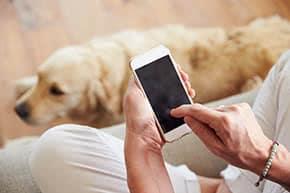 Hundehalterhaftpflicht - Hund und Handy