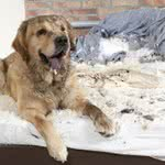 Hundehalterhaftpflichtversicherung / Hundehalterhaftpflicht