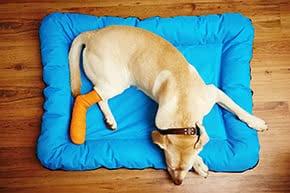 Hundehalterhaftpflicht - Verletzter Hund