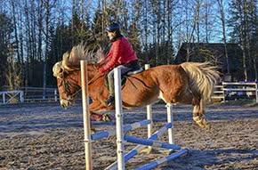 Pferdehalterhaftpflicht - Pferd springt über Hindernis