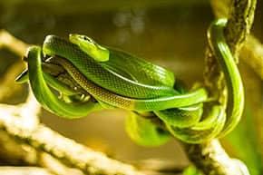 Tierhalterhaftpflicht - Schlange im Terrarium